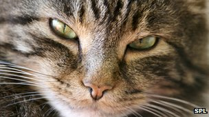 Cats are common culprits for pet allergies
