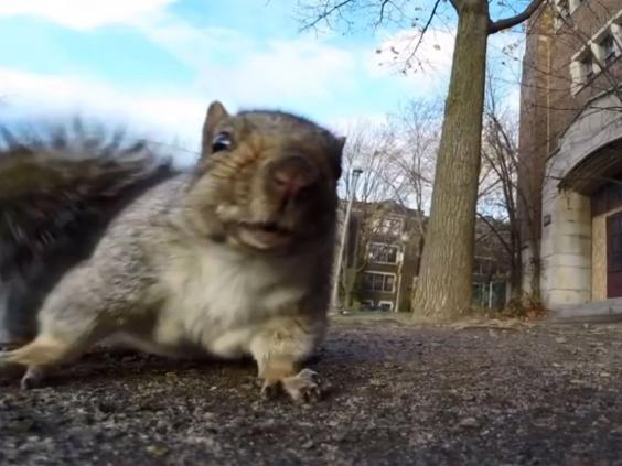 words-squirrel