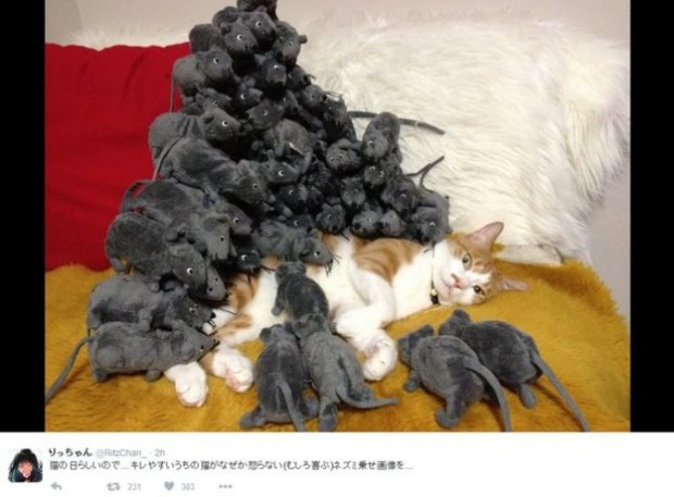 This Twitter user pranked a sleeping pet cat which woke up to find itself buried under an avalanche of toy mice