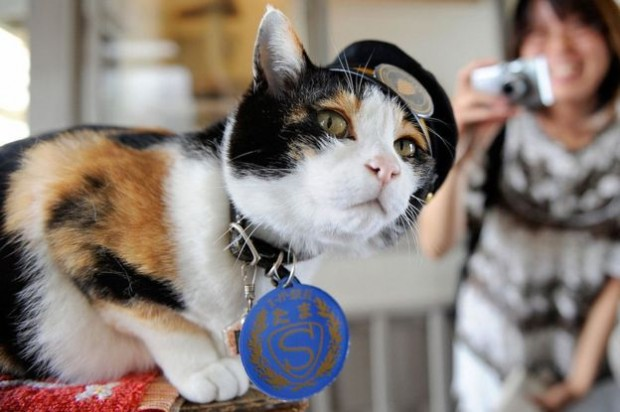 Tama pulled in fans and tourists till her death last year