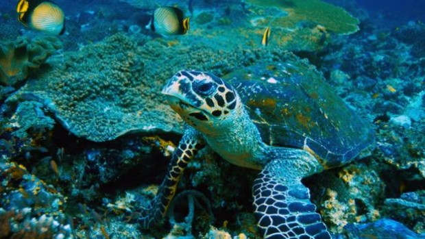 In 1972, Daeng Abu answered the call for volunteers to live and raise turtles on Pulau Cengkeh (Credit: Manfred Bail/Alamy)
