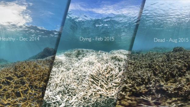 The image shows the same reef before, during and after a devastating coral bleaching event in American Samoa (Credit: XL Catlin Seaview Survey)